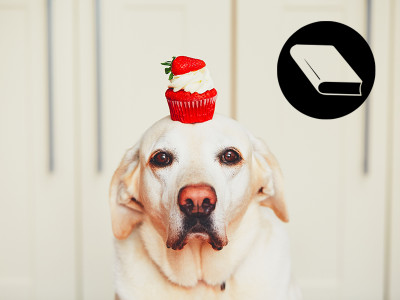 Mag je taart op een hond gooien?