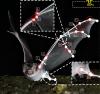 Fledermaus-Robot