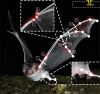 Vleermuisrobot