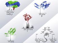 Des cellules photovoltaïques ultraperformantes grâce aux algues ?