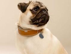 Dog app dog