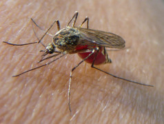 Laser contre malaria