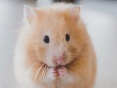 Moniteur de forme pour hamster