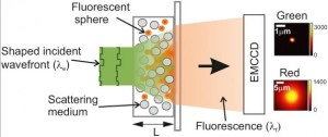 Experimental setup for measuring light falling on and moving through an opaque layer, using fluorescent microscopy to monitor the results.