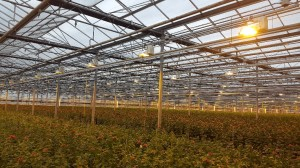 DC-powered greenhouse saves 30% on energy bill