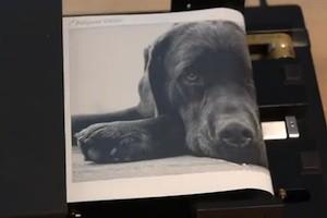 Aufrollbares E-Paper mit 800 x 600 Pixel