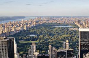 Stadtbäume sind wertvolle CO2-Senken