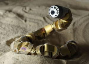 La nature fait avancer la robotique