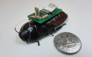 Cyborg-kakkerlakken sporen geluidsbronnen op
