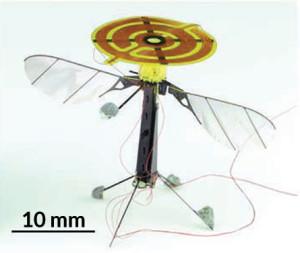 Robot-insect kan vliegen en landen
