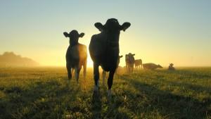 Koeien in de mist - Streekconferentie Norg100