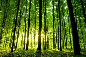 Natuuurbescherming met Natuurmonumenten