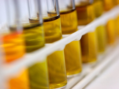 Dutch Breakthrough In Biofuel