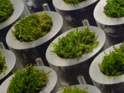 The hidden (electrical) power of moss