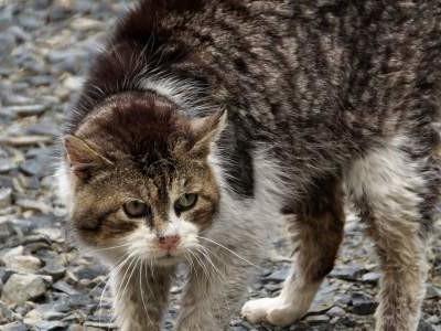 Shoo Cat!