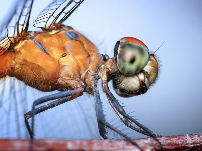 Self-driving cars get help from dragonfly