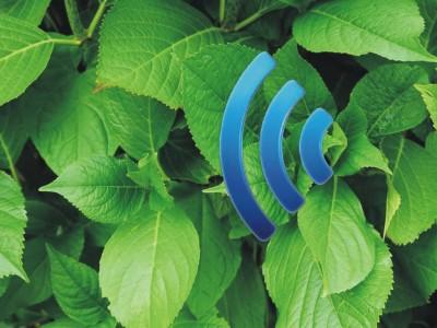 Plantenna – Internet der Pflanzen