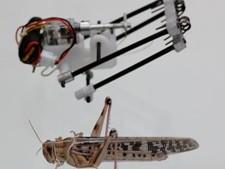 Robot-sprinkhaan