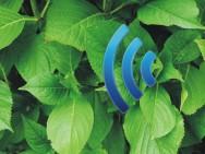 Ein Internet der Pflanzen kann schnell Realität werden. Bild: TU Delft.