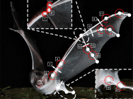 Robotic bat