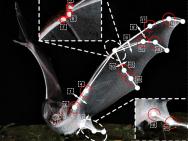 Robotic bat