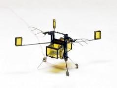 Die neue RoboBee fliegt, taucht und springt aus dem Wasser (Havard University)