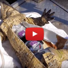 Robot à peau de croco (en latex)