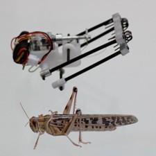 Robot-sprinkhaan © aftau.org