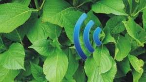 Een Internet of Plants kan snel werkelijkheid worden (achtergrondafbeelding: TU Delft).
