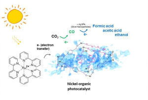 De nikkel/organische katalysator zet CO2 exclusief om in CO dat tot hoogwaardige vloeibare brandstoffen kan worden omgezet (afbeelding: Kaiyang Niu en Haimei Zheng / Berkeley Lab).