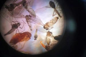 Für Insekten unattraktive LEDs