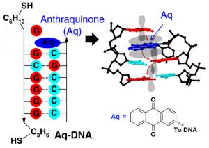 Modifizierte DNA. Statt nur A, C, T und G wurde hier Aq (Anthrachonon) eingefügt. Bild: Biodesign Institute, Arizona State University