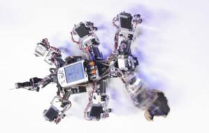 Robot marcheur chaotique