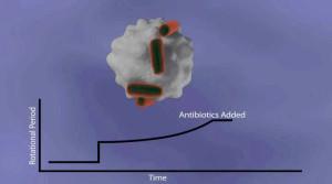 La croissance des bactéries observée sans microscope