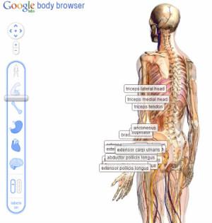 Spectaculaires planches anatomiques en relief de Google