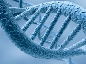 L'ADN a bonne mémoire