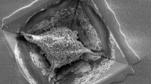 3D-brein op een chip