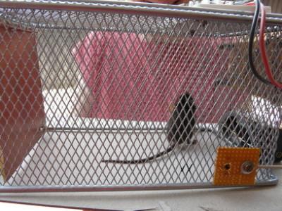 Not killing mouse trap [140011-I]