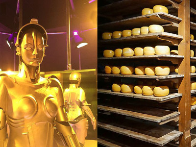 Dutch cheese-maker robot