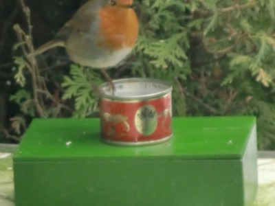 Bird-drinking-water heating [130256-I]