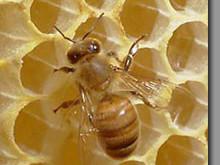 Beehive monitoring