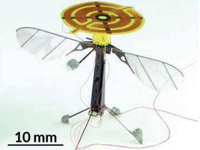 Insekten-Roboter kann fliegen und landen