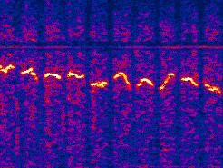 Spectrum-Explorer: VB.net Spectrum-Versus-Time Analyzer für den Arduino-Datalogger