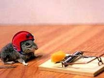 Animal friendly mousetrap with email notification