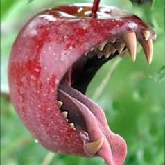 Apple op rooftocht naar flashchips