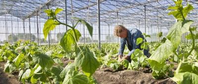 De boeren van Willem&Drees